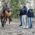 Pferdgestuetztes Coaching by Franziska Koehler