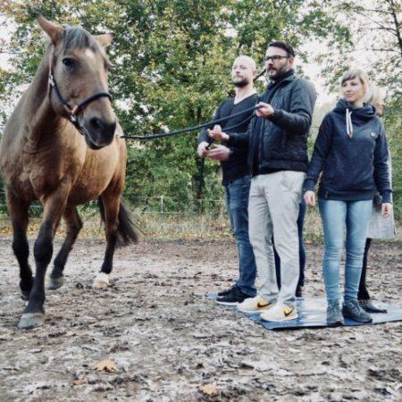 Warum Coaching mit Pferd?
